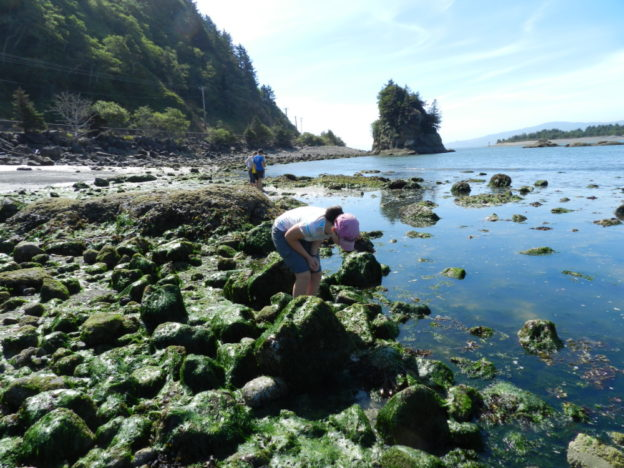 Oregon tide pool